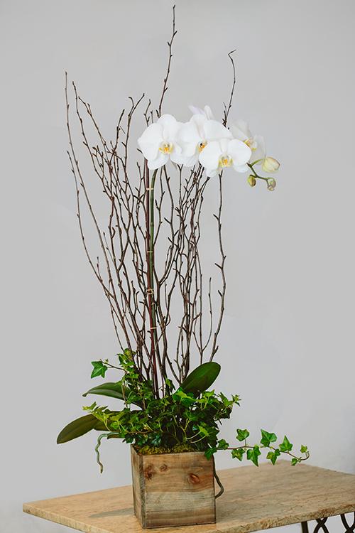 Orchid Gardens 187 Pasadena Florist Brad Larsen Florals