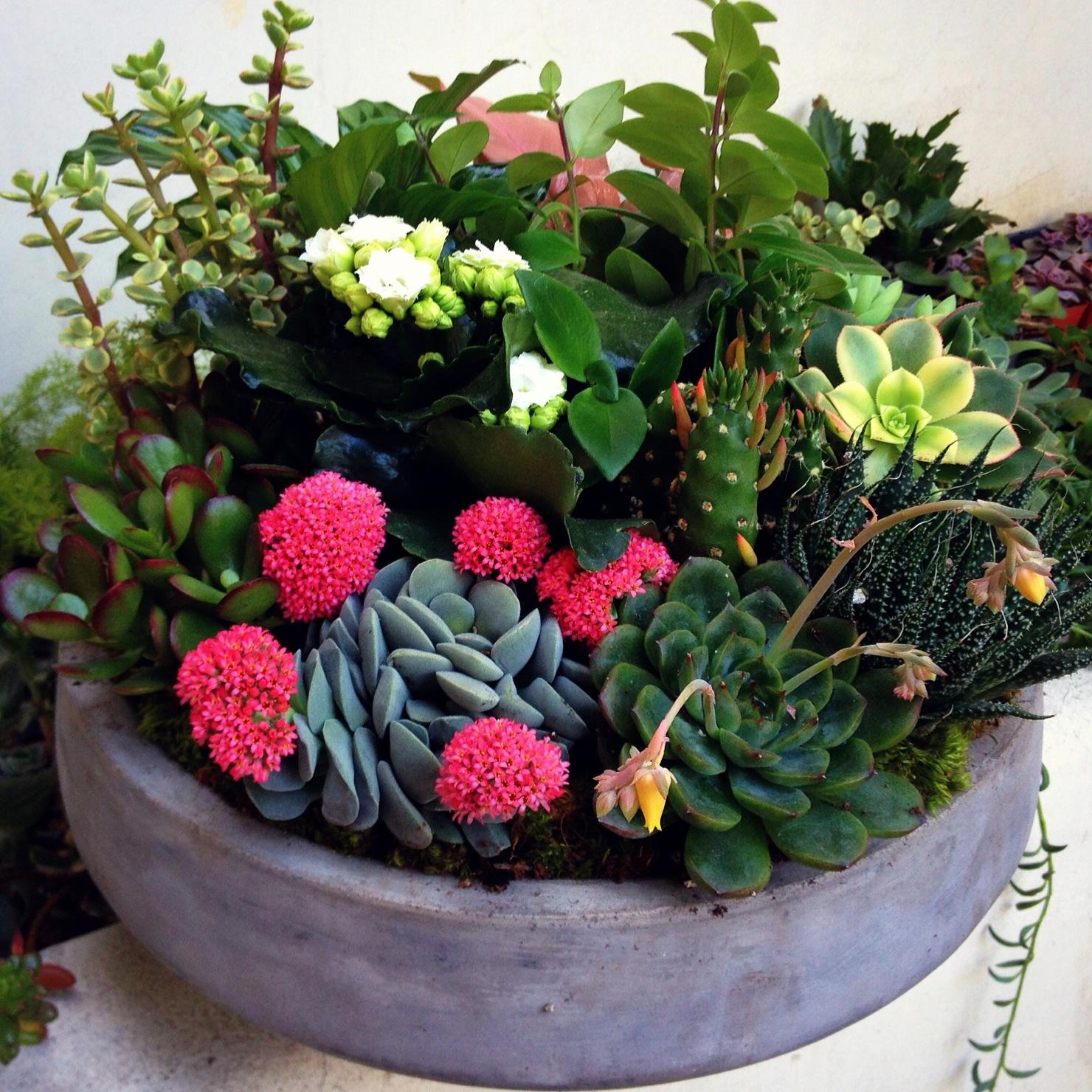 Succulent Gardens 187 Pasadena Florist Brad Larsen Florals