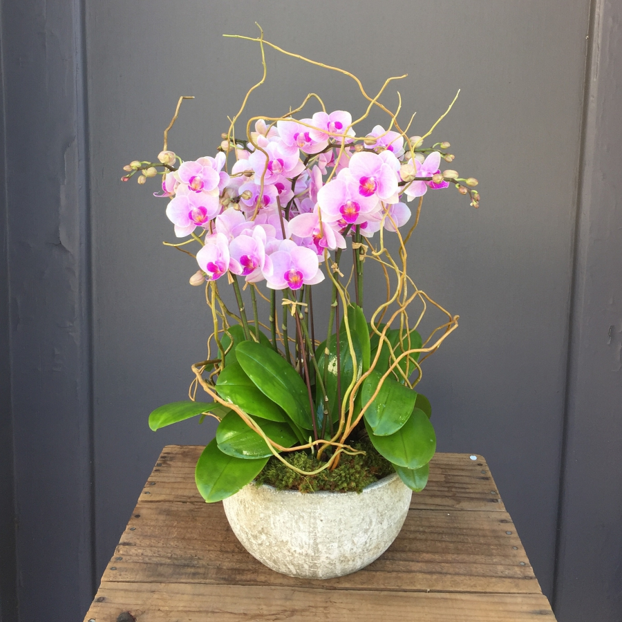 orchid gardens  u00bb pasadena florist