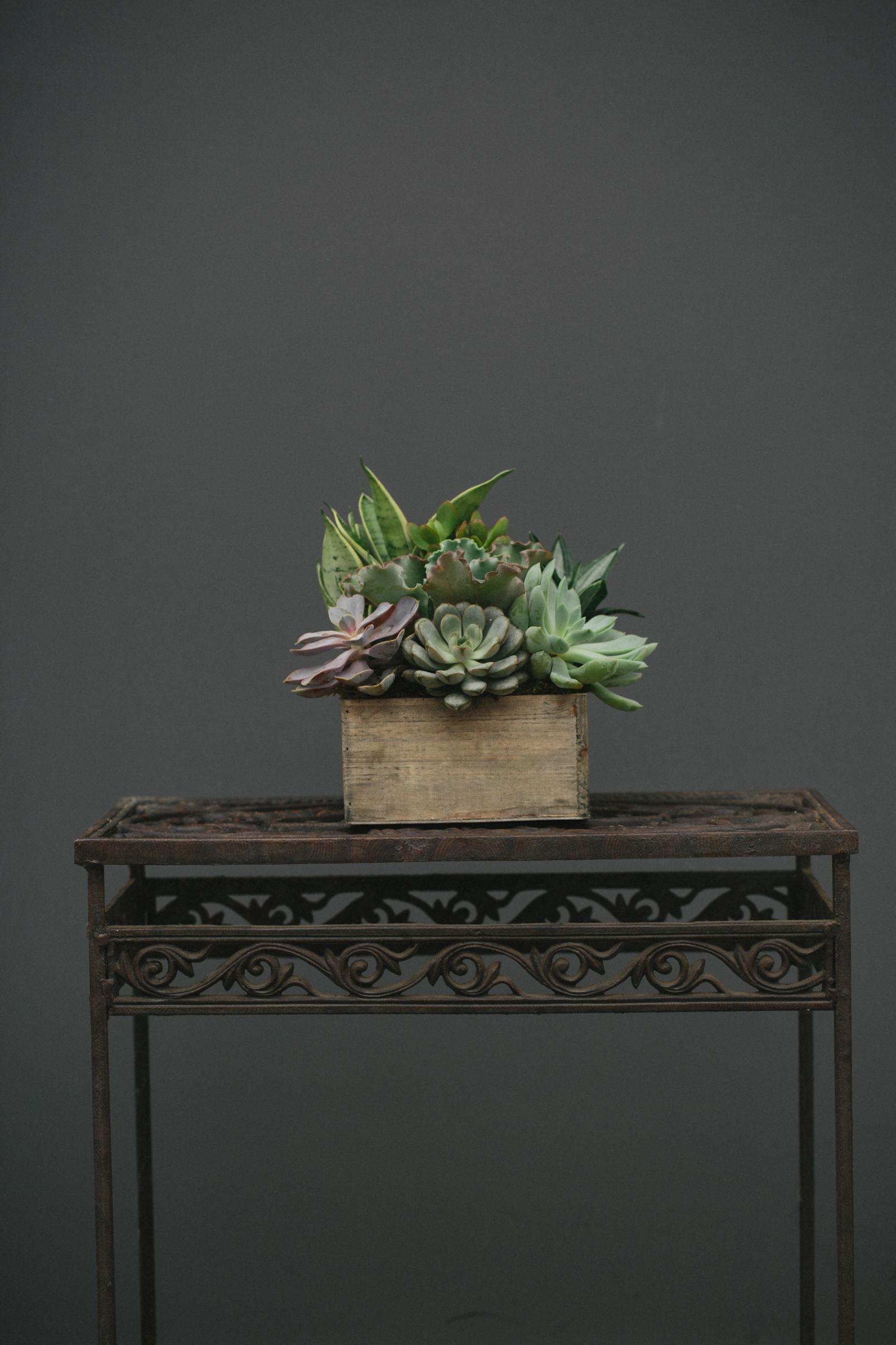 Medium, Compact Succulent Garden in Rustic Wooden Box